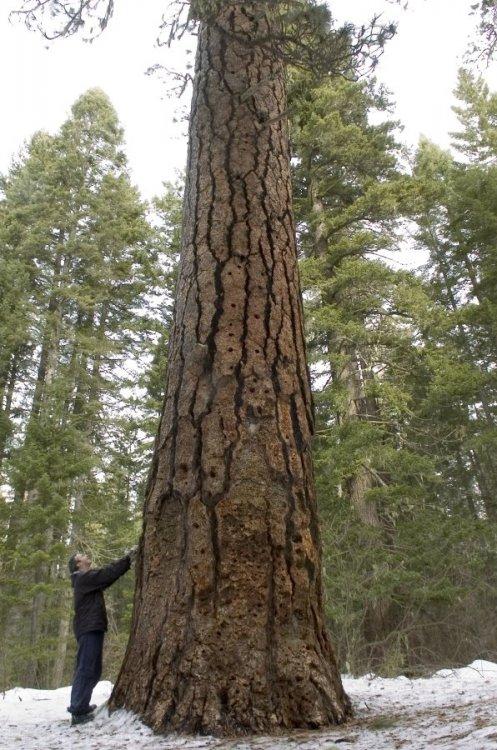 x-c_skiing_Big_Tree_ski_loo.thumb.jpg.4b4f226042eb19bc4ed01cce3f33a52f.jpg