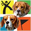 Team BeagleBrothers